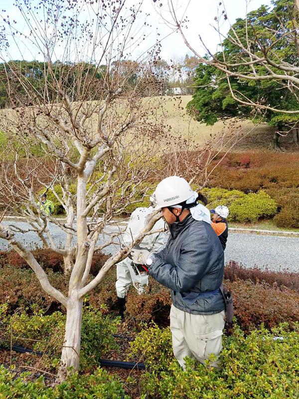 日本庭園管理技術講習